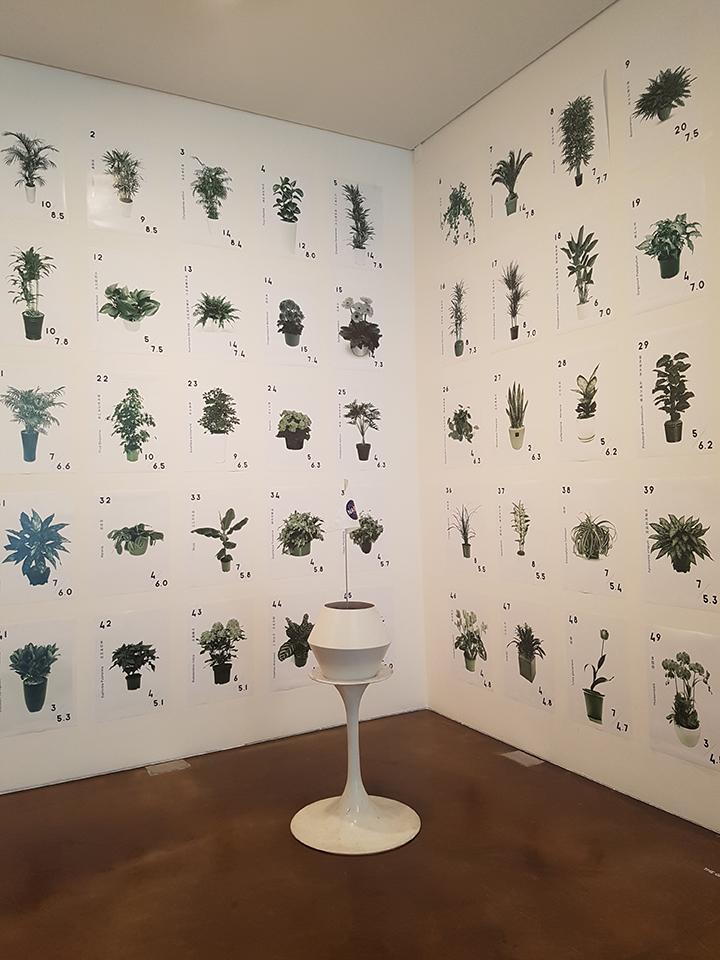 국제갤러리에서 열린 '유명한 무명'전 에서는 나사(NASA)의 식물 공기정화능력 실험 결과 순위를 전시했다. 〈THE 50 GREATEST PLANTS BY NASA, 나사의 공기 정화 연구: 실내 공기 오염 물질 감소를 위한 실내조경식물 50〉