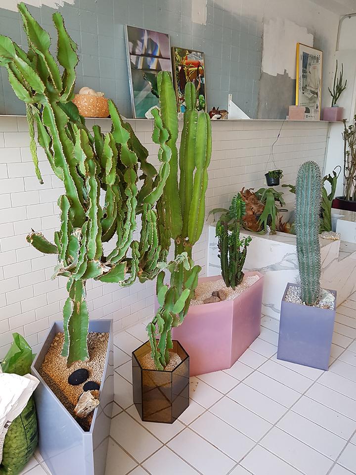 베리띵즈의 스튜디오에서는 아름다운 모양의 다양한 식물들이 자연스럽게 자리한 모습을 볼 수 있다.