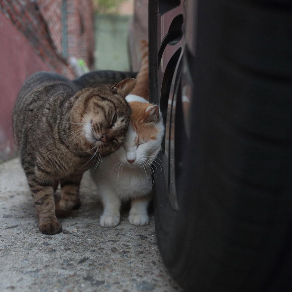 고양이다운 길고양이의 모습 ©김하연