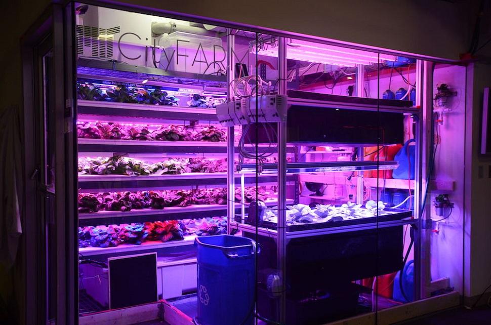 """미국 MIT 미디어 랩(MIT Media Lab) 산하 MIT 시티팜(City Farm) 오픈 농경 랩(Open Agriculture Lab)은 다음과 같이 전망했다. """"미래에는 컴퓨터가 알아서 일상적인 식용 채소를 키울 것이며, 현재 무분별하게 대량생산되어 유통되는 수퍼마켓 야채, 과일류보다 영양가 높고 재배과정이 투명한 먹거리를 직접 재배할 수 있게 될 것이다."""" © MIT OpenAg 2015 MIT Media Lab"""