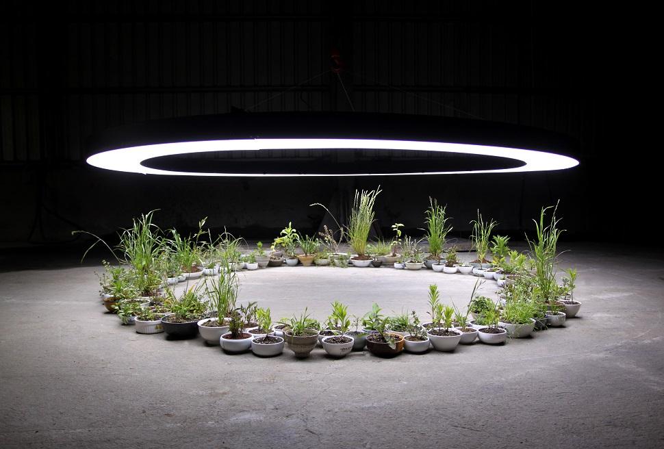 김원정, <완전한 인식>, 2011, 식물, LED조명, 그릇, 가변설치
