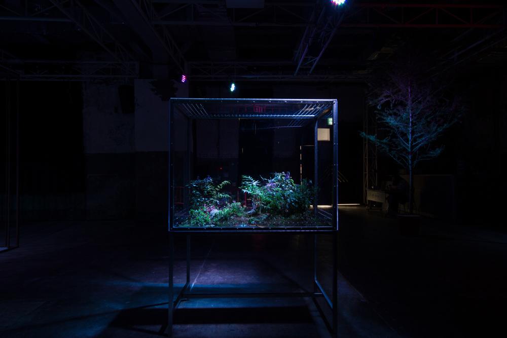 김시하, 〈Visual Garden〉, 식물, 나비, 아크릴, 스텐, 130x70x200cm, 2014