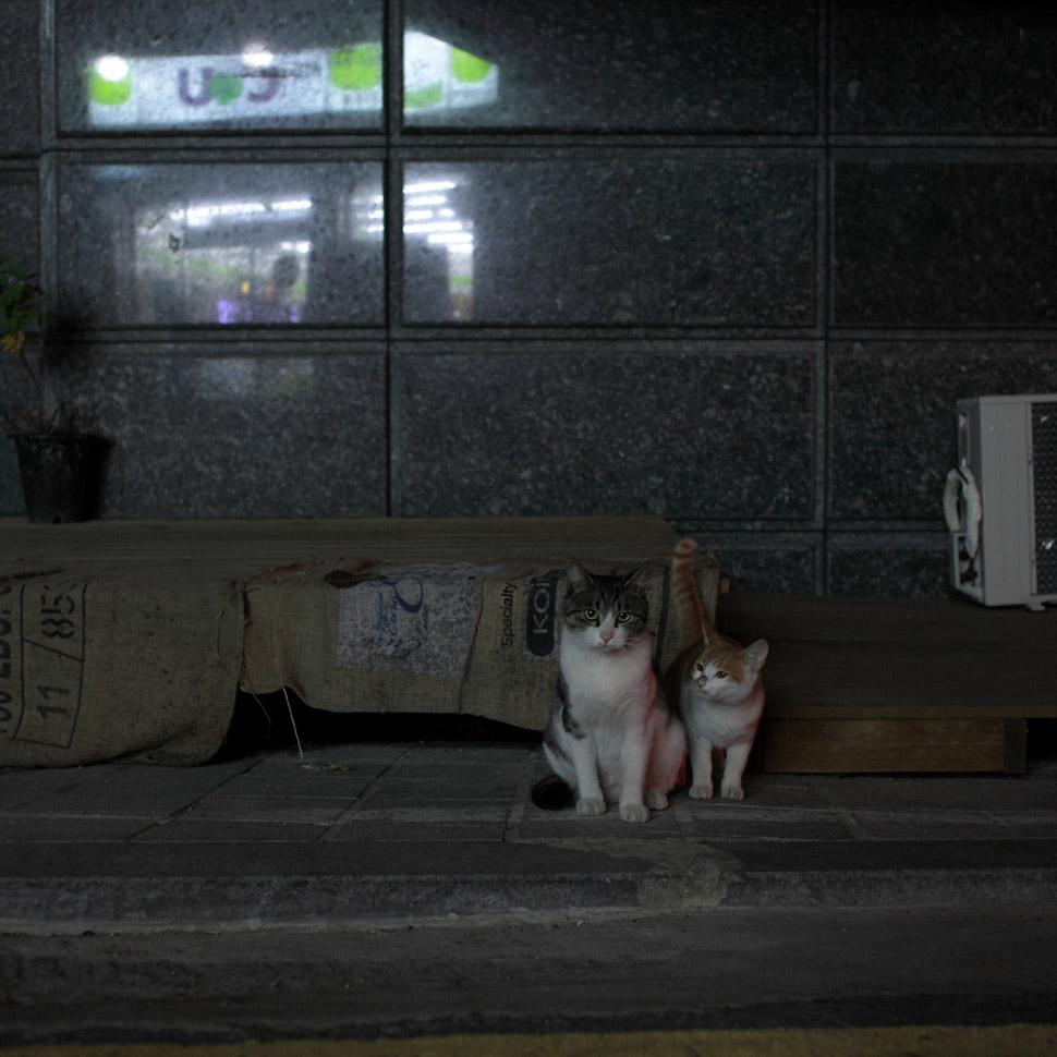 어미와 새끼의 눈빛은 확연히 다르다. ©김하연