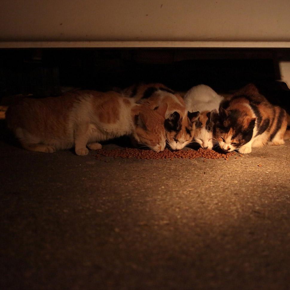 작가는 새벽에 신문을 배달하면서 고양이에게 밥을 주고, 사진도 찍는다. 몸이 열 개라도 부족하지 않을까. ©김하연