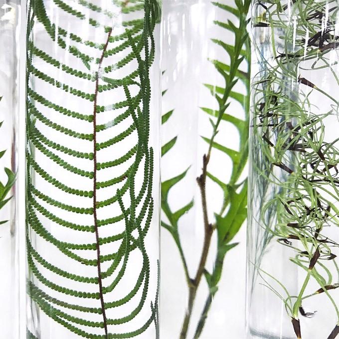 슬로우파마씨, Plant Specimen, 2017, 식물, 특수용액, 가변설치